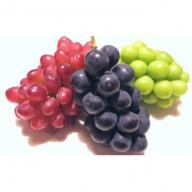 農園直送 山梨県産ブドウ3色詰め合わせセット(3kg 4~5房)
