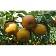 梨界のサラブレッド あきづき(5kg)