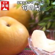 【信州須坂の梨】旬の梨 約5kg