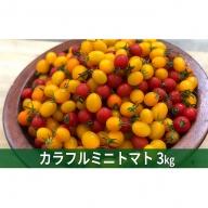 メグちゃん工房のカラフルミニトマト3種の【アイコ】約3kg