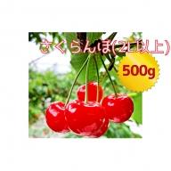 嶋田茂農園「匠」ジャンボサイズ(2L以上)さくらんぼ500g