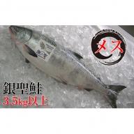 日高産銀聖鮭【生】3.5kg以上(メス)
