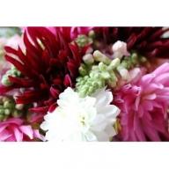 SL0011 花福)年4回 四季を楽しむ酒田のお花たちをお届けします