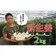19-511.【期間限定】初夏だけの味わい!ハルキ農園の新生姜2kg