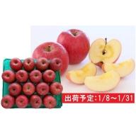 1月 津軽産 蜜入りサンふじ約5kg