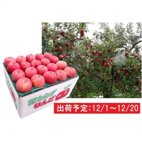 年内 津軽産 家庭用葉取らずサンふじ約10kg