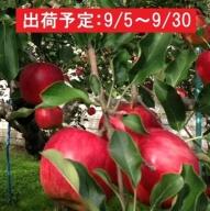 9月 土岐りんご園 家庭用サンつがる約10kg