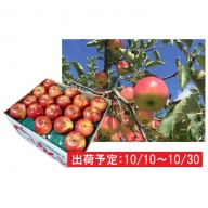 10月 土岐りんご園 家庭用ジョナゴールド約10kg