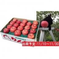 11月 土岐りんご園 サンふじ約5kg秀 五所川原市産