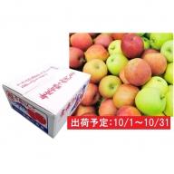 10月 家庭用 津軽のおまかせりんご約10kg1種(つがる、とき、黄王等)