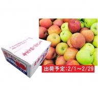 2月 家庭用 津軽のおまかせりんご約10kg1種(王林、ジョナゴールド等)