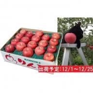 12月 土岐りんご園 サンふじ約5kg秀 五所川原市産※クレジットのみ