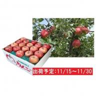 11月 土岐りんご園 家庭用サンふじ約10kg 五所川原市産