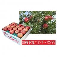 12月 土岐りんご園 家庭用サンふじ約10kg 五所川原市産