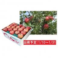 1月 土岐りんご園 家庭用サンふじ約10kg 五所川原市産