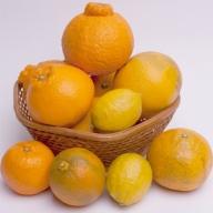 <4月発送>有田の柑橘詰合せ2.5kg