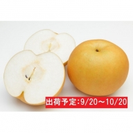 蔵王の新高梨約5kg 特大玉(4~5L程度)