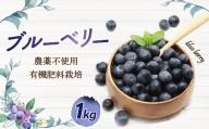 栽培期間中無農薬・有機肥料で丹精込めて栽培したブルーベリー 1kg[C2240]