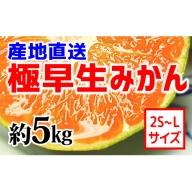 【産地直送】有田みかん(極早生品種)約5kg(2S~L)