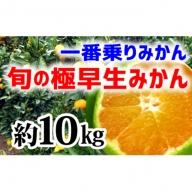 【極早生みかん】旬の極早生10kg(2S~L)