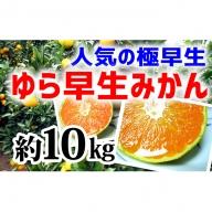 【極早生みかん】ゆら早生10kg(2S~L)紀州グルメ市場
