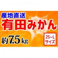 【産地直送】有田みかん 約7kg(2S~L)