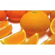 有田育ちの濃厚柑橘詰め合わせセット 約7.5kg