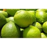 【国産】紀州和歌山 有田レモン 3kg