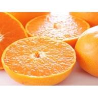 柑橘の王様 せとか (ご家庭用)