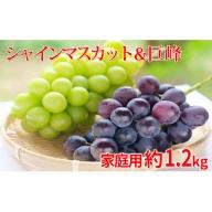 長野市産シャインマスカット&巨峰 食べ比べセット 約1.2kg(2房)家庭用