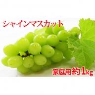 長野市産 シャインマスカット 約1kg(2房) 家庭用