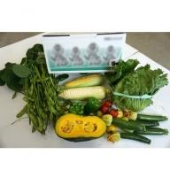 A3102 楽しい畑のおすそわけ体験野菜詰合せ