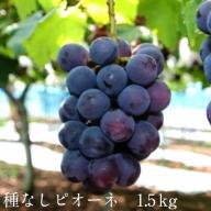 10-JY-10 種なしピオーネ 1.5kg【8月下旬~10月初旬発送】