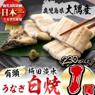 a0-006 楠田の極うなぎ白焼き超特大1尾