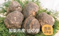 加東市産(旧東条)山の芋