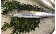 OM-04 獲れたて鮮魚 サワラ約2kg(1匹)