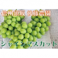 【後藤農園直送】大人気!シャインマスカット 約1.8kg(3~4房)