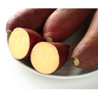 【A14050】鹿児島県産上質絹甘芋シルクスイート《先行予約》(約10kg)
