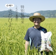 B12-025 特別栽培米 さがびより(7kg)