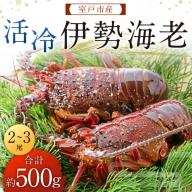 TK009室戸産活冷伊勢海老【2~3尾】