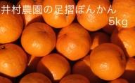 【B-79】  井村農園の足摺ぽんかん【5kg】