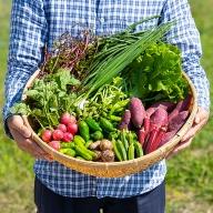 C−020.佐賀産季節の旬野菜B(15種類)