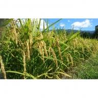 【農家直送】秋田県 仙北市産米 令和元年産 あきたこまち(玄米 10kg)