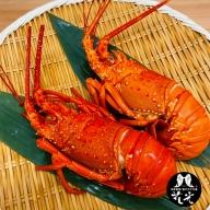 B029◇淡路産「天然」いせえび(ボイル)
