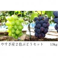 11-JY-11 2色ぶどうセット 1.5kg 【9月~10月初旬発送】