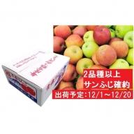 12月 2種以上 家庭用津軽のおまかせりんご約10kg(サンふじ確約)
