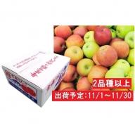 11月 2種以上 家庭用津軽のおまかせりんご約10kg