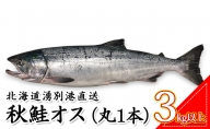 【納期指定不可】北海道湧別港直送 秋鮭オス3kg以上(丸1本)