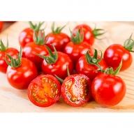 C−021.永尾産ちの1番人気フルーツミニトマト