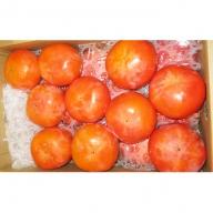 富有柿5kg箱詰め(LLL~L 16~19個程度)